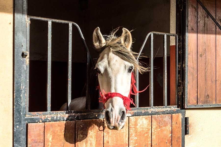 camas para caballos
